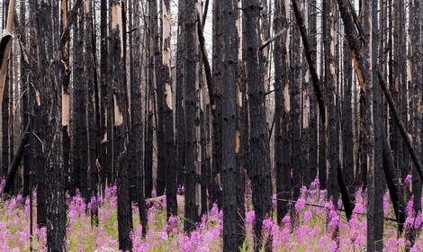 Wildfire Slide Image