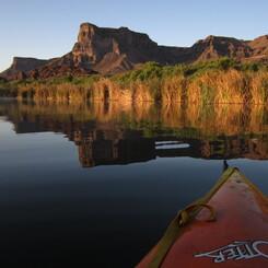 Lower Colorado River WIllow Flycatcher Study SWCA